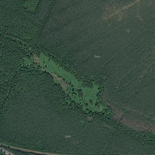 странная поляна в лесу